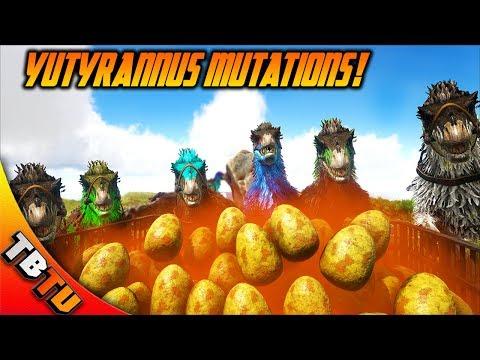 YUTYRANNUS HATCHENING! YUTYRANNUS COLOR MUTATIONS! Ark Survival Breeding Evolved