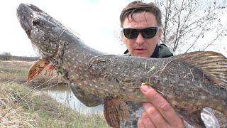 Щука чуть не оставила без пальца Рыбалка на спиннинг весной
