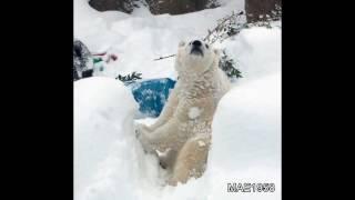 Oregon Zoo on Snow day (Jan 11, 2017)