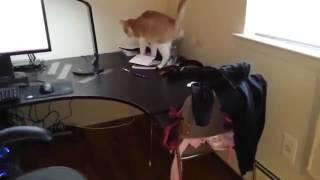 Хороший способ отучить кота лазить по столу