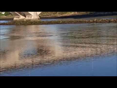 Delfines en el río Lerez
