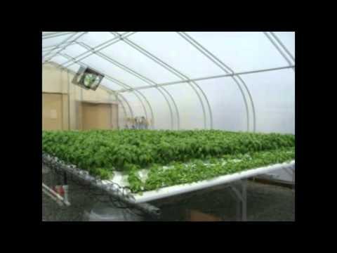 Υδροπονική καλλιέργεια βασιλικού με τη μέθοδο NFT