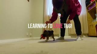 Puppy Brilliance- Don't wait to start training!