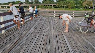 FISHING IN SINGAPORE LOWER SELETAR RESERVOIR FISHING DECK SHORTS