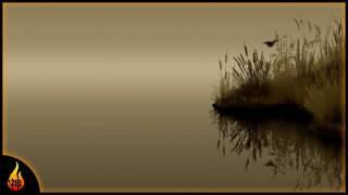 1 Hour Piano Music | Cattails | Beautiful Instrumental Piano Music