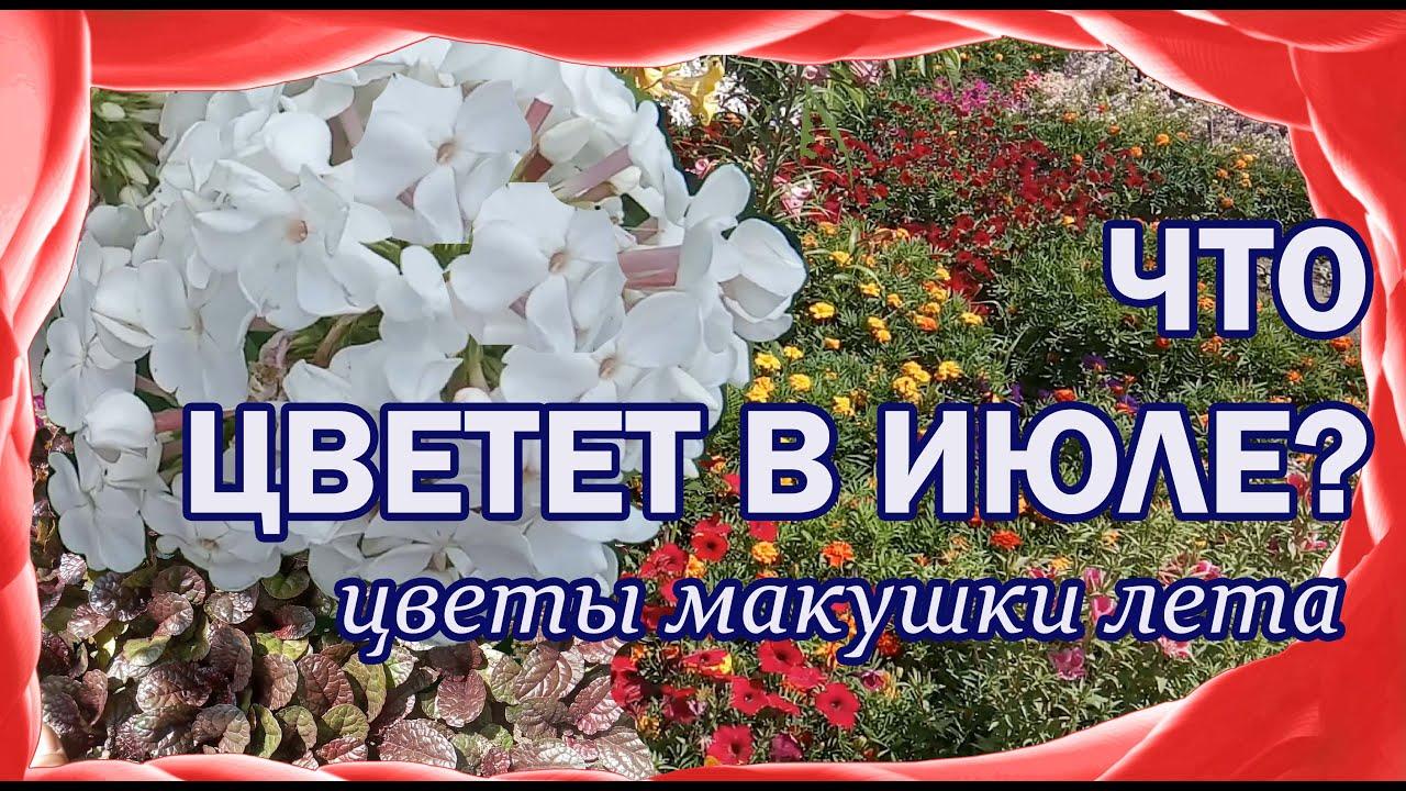 Какие цветы цветут в июле? Многолетники и однолетники.