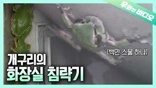 개구리에게 화장실을 침략당했다... ┃Invasion …