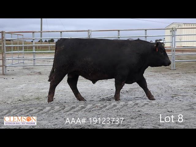 Clemson Extension Bull Test Lot 8