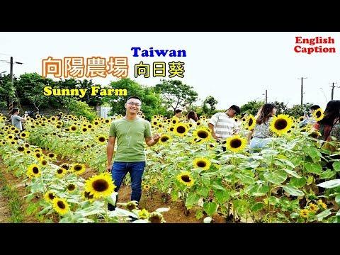 [桃園蓮花季向陽農場] 滿滿不同品種的向日葵好好拍,假日帶你搭一次接駁車到農場看花