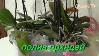 полив орхидеи, как поливать орхидеи Phalaenopsis. how to water orchids Phalaenopsis(Как я поливаю свои орхидеи Phalaenopsis. Делюсь своим опытом. Все мои видео о цветах здесь : https://www.youtube.com/playlist?list=PLHN..., 2015-02-26T13:48:20.000Z)