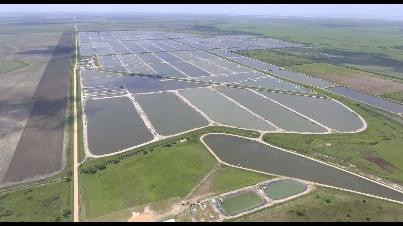 Bower's Shrimp Farm | Part 1 - This is Reed Bowers!