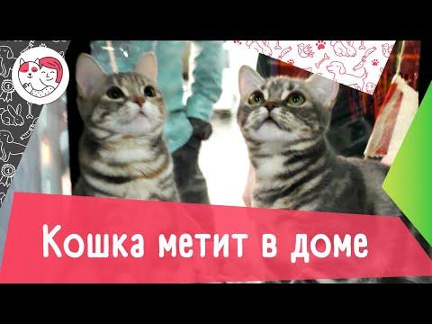 Вопрос: Как отучить взрослую кошку ссать и гадить в разных местах квартиры?