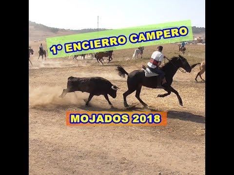 MOJADOS (Va), 1º ENCIERRO CAMPERO, prefiestas. 30/09/2018