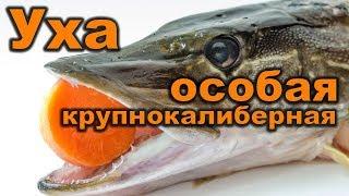 Уха из щуки. Как варить рыбу. Первые блюда. Кулинарные рецепты. How to cook fish soup