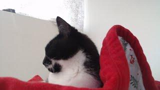 pussy cat live stream