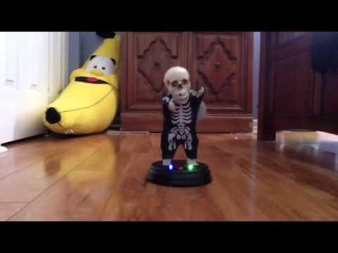 Grooving Ghoulie  Skeleton Hey Baby (Drop It To The Floor)