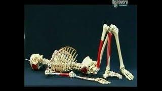 Искусственные суставы 2 |  Как это работает
