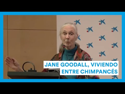 Jane Goodall, viviendo entre chimpancés.