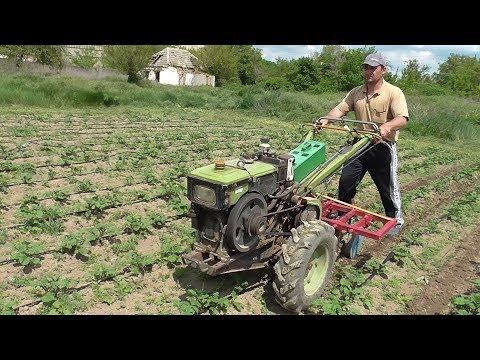 Культивация и окучивание картофеля по капельной ленте