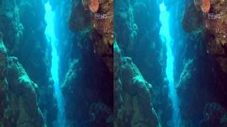 Rafa koralowa Morza Czerwonego