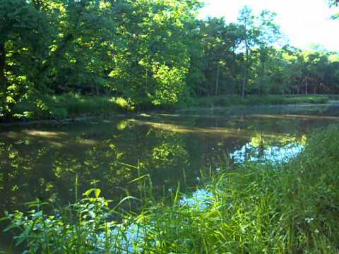 I&M Canal - 2013 Forest Preserve near Canal (Part 3)