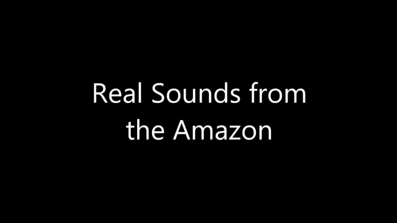 Real sounds of the Amazon Rainforest