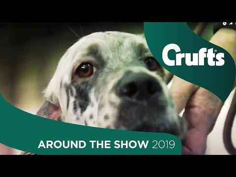 Around The Show On Day 1 | Crufts 2019