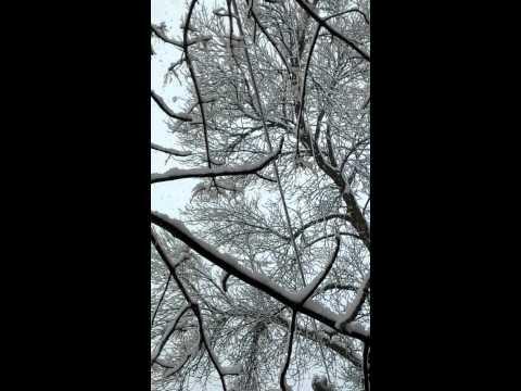 Asi cae la nieve en austin mn Mp3