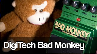 Some LOVE for the Digitech Bad Monkey | and LESSON on guitar tone