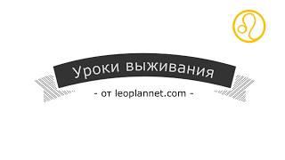 Уроки выживания от leoplannet.com.ua