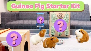 Guinea Pig Care Starter Kit for Beginners: The Essentials | GuineaDad