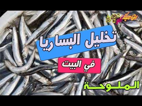أسهل طريقة تخليل سمكة البساريا ( الملوحة ) في البيت