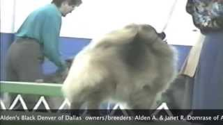 American Pomeranian Club Usa-. Champion Show Kennels Club Akc