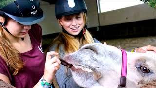 Pony Park Padenstedt Sommer '17