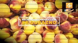 SPOT FENIX S.A. - RECEPCIÓN DE DURAZNO (TEMPORADA 2020)
