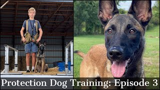 Teaching My Son To Train Protection Dogs Episode 3 | Malinois & Dutch Shepherd