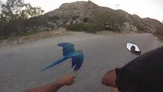 Racing my Macaw Parrot at Kolimbithres-Paros