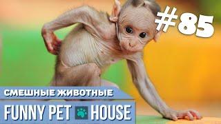 СМЕШНЫЕ ЖИВОТНЫЕ И ПИТОМЦЫ #85 АВГУСТ 2019   Funny Pet House