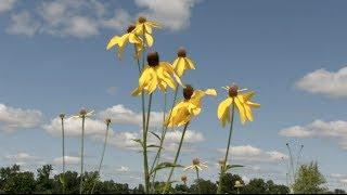 Prairie Yard & Garden: Prairie Flora: History and Future
