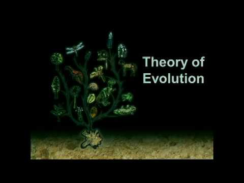 Fossils and Evolution - What is the Biblical View?