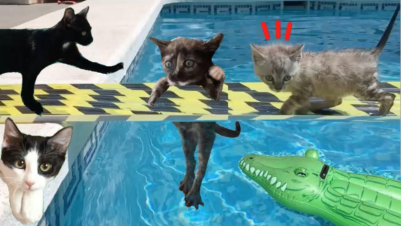 Gatos Luna y Estrella reaccionando a puentes en la piscina con las gatitas / Videos de gatitos