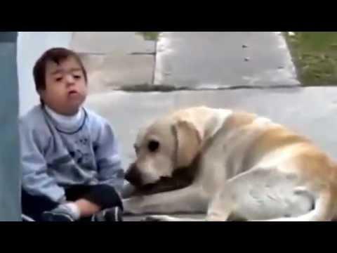 Perro cuidando a ni o con sindrome de down impactante video youtube - Animales con personas apareandose ...