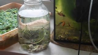 Мини аквариум. Как сделать аквариум бесплатно.