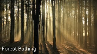 🌲Forest Bathing   The Miraculous Healing Power of Nature [4k]