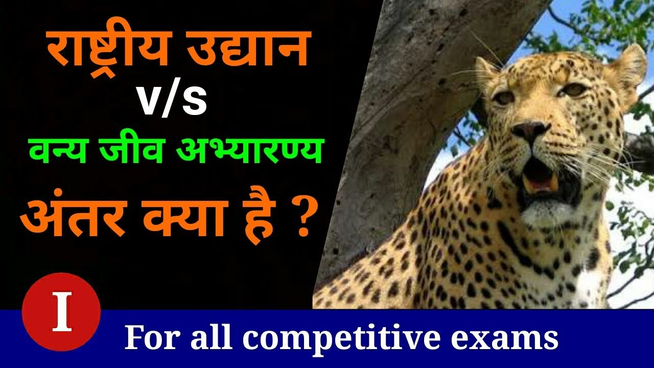 Difference Between National Parks And Wildlife Sanctuary National Parks Next Exam Hindi Youtube