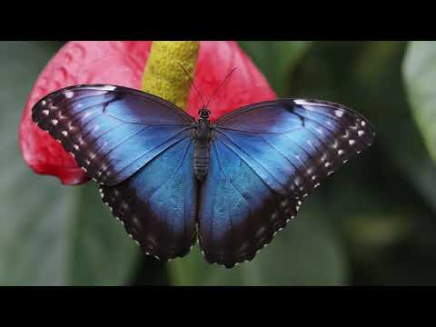 Guided Meditation: Leave Stress and Worry Behind - Butterfly