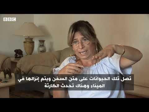 تعذيب الجمال بسوق برقاش المصري  - 17:54-2019 / 8 / 20