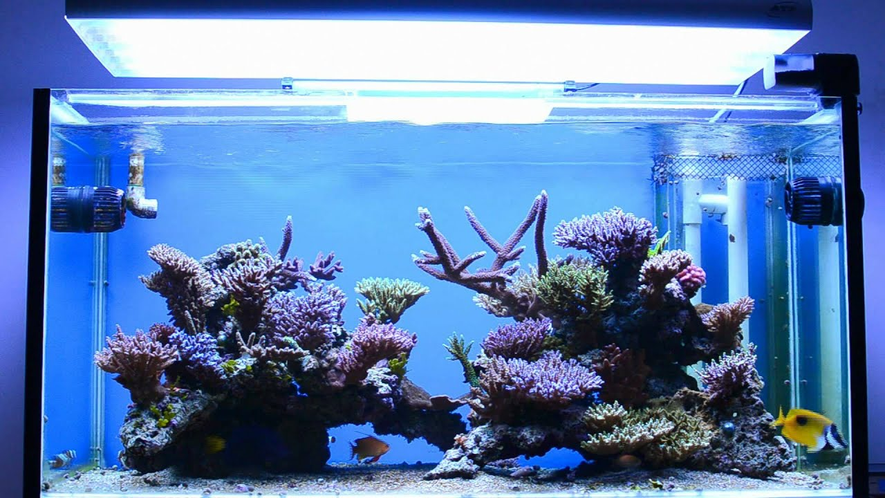 Bonsai Reef Tank Marcus Youtube