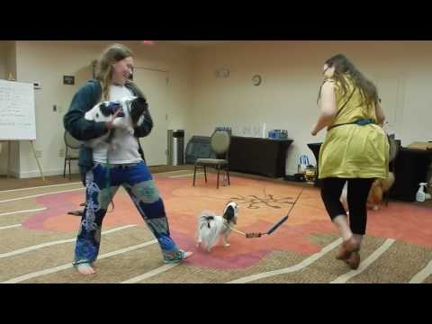 Japanese Chin service dogs dancing to fiddle music