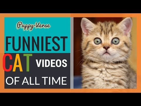 Funniest Cat Videos of all TIME | Puppy-Verse